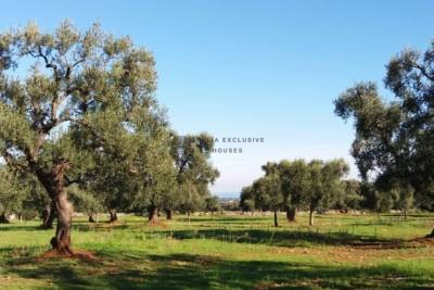 LAND WITH SEA VIEW IN CAROVIGNO, APULIA