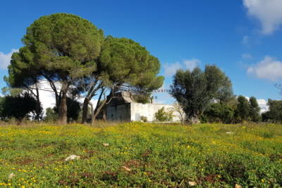 MARVELOUS STONE COUNTRY HOUSE TO RENOVATE IN CAROVIGNO, APULIA