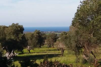 LAND WITH SEA VIEW NEAR OSTUNI, APULIA