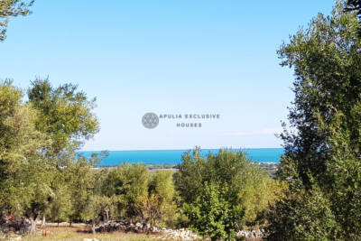 OLIVE GROVE WITH SEA VIEW FOR SALE IN CAROVIGNO, APULIA
