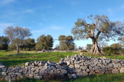 PANORAMIC TRULLI TO RENOVATE IN OSTUNI