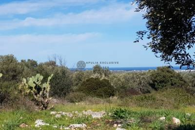 LAND WITH SEA VIEW FOR SALE IN CAROVIGNO APULIA