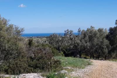 BEAUTIFUL LAND WITH SEA VIEW – CAROVIGNO APULIA