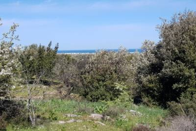 LAND IN CAROVIGNO WITH SEA VIEW APULIA