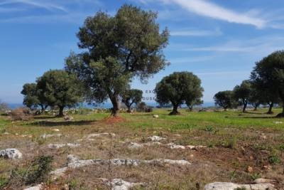 LAND WITH BEAUTIFUL SEA VIEW – CAROVIGNO APULIA