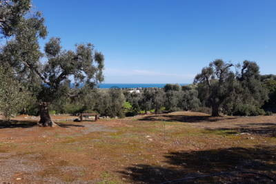 SEA VIEW LAND FOR SALE IN APULIA – CAROVIGNO