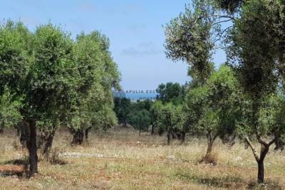 ASTONISHING LAND OVERLOOKING THE SEA CAROVIGNO PUGLIA
