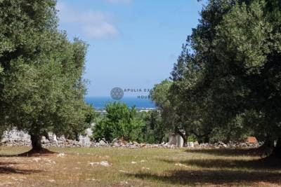 BEAUTIFUL SEA VIEW OLIVE GROVE WITH APPROVED PROJECT – CAROVIGNO