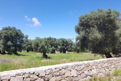 WONDERFUL LAND WITH ANCIENT OLIVE GROVES