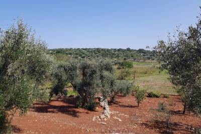 LAND WITH SEA VIEW IN OSTUNI