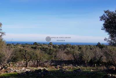 LAND WITH SEA VIEW IN CAROVIGNO