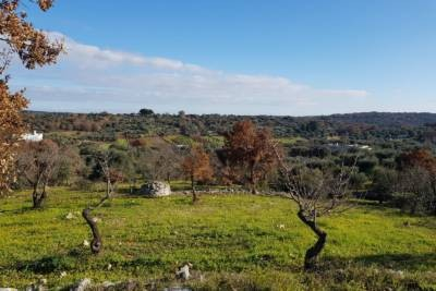LAND WITH PANORAMIC VIEW IN OSTUNI