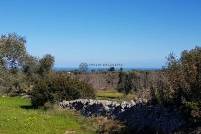 LAND WITH SEA VIEW – CAROVIGNO