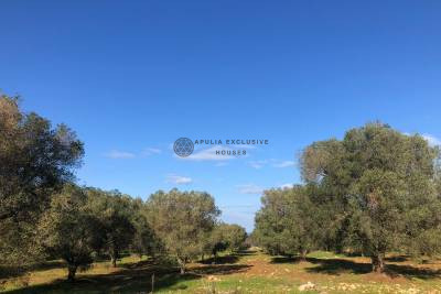 LAND WITH SEA VIEW IN PUGLIA – CAROVIGNO
