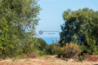 AMAZING SEAVIEW LAND WITH CENTURIES-OLD OLIVE TREES – CAROVIGNO