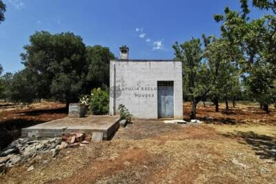 CENTURY-OLD OLIVE FIELD WITH LAMIA | in Carovigno